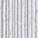 Woodland-Silver-Birch