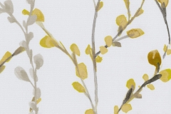 Willow-Brazen-Yellow